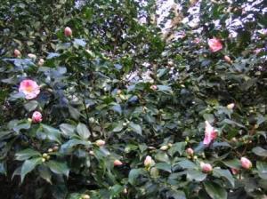 赤い花の例