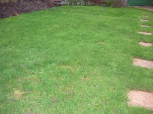 うちの庭の緑の芝生