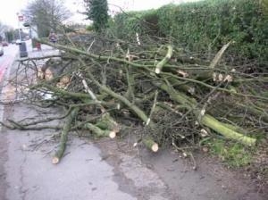 道端で倒れて伐採された木
