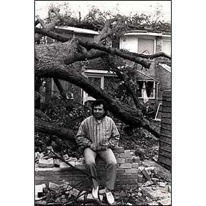 家に木がなぎ倒されて