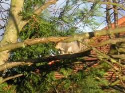 りすが木の枝で何かしている