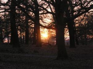 木立の間から夕陽