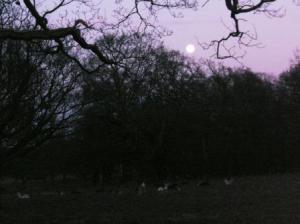 月と鹿の図