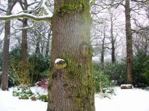 目と鼻が付いている木