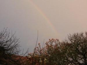 マグノリアと虹
