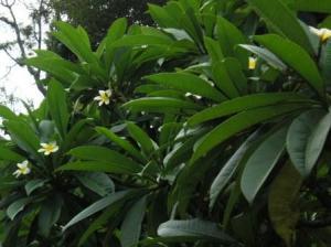 えもいわれぬ香りの花