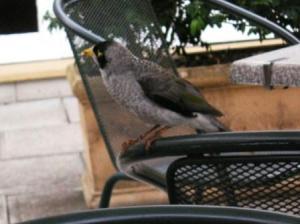 良く見かけた鳥