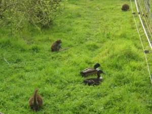 哺乳類と鳥類の共生