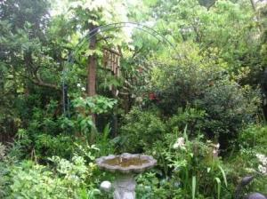 狭くてぎっしりの庭
