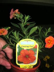 渋いオレンジの花