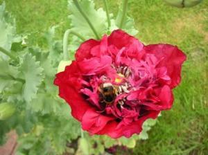 bumble bee working