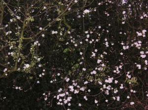 花が咲き出していた