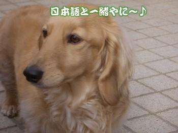 日本語と同じ