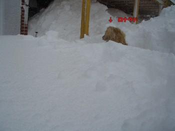 雪とロナウド