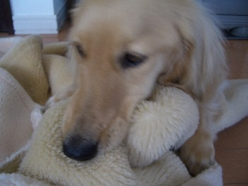 ロナウドの毛布