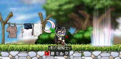 Maple0446