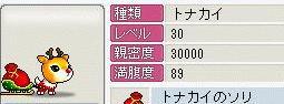 Maple0534