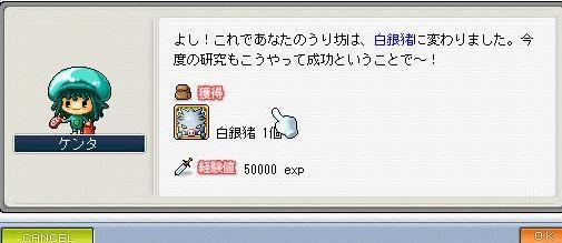 Maple2608