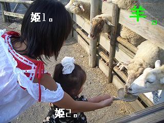 羊さんっ どうぞっ!