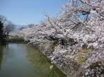 松本城32小 外濠の桜並木