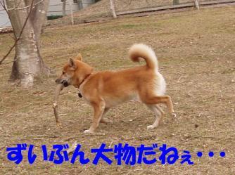 bP2230032.jpg