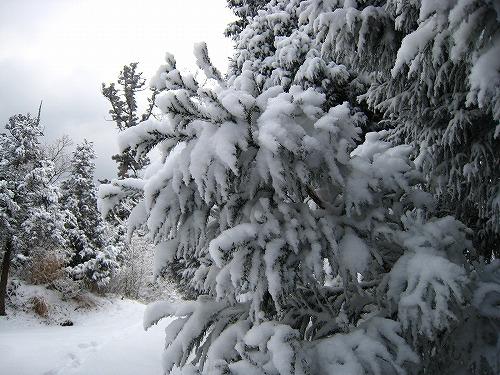 33 雪の重み