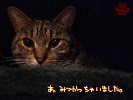 newyamacan1.jpg