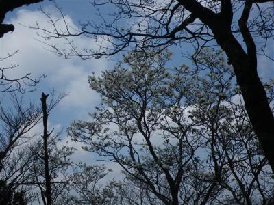 2009-04-12-068.jpg