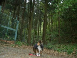 聳え立つ森林