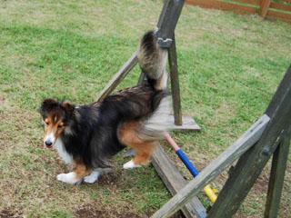 サラもジャンプざます。