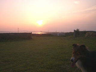 きれいな夕日ざます。