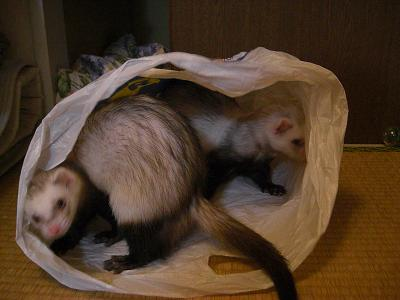袋だいすき~~