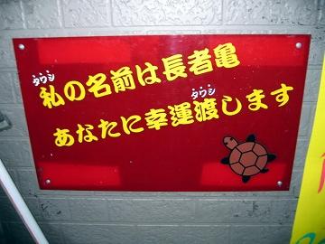 亀戸の亀2