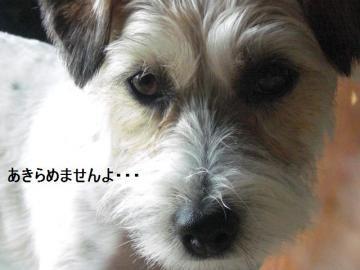 しつこい犬