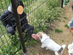 へたれ犬②