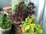 A家庭菜園