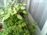 A家庭菜園1