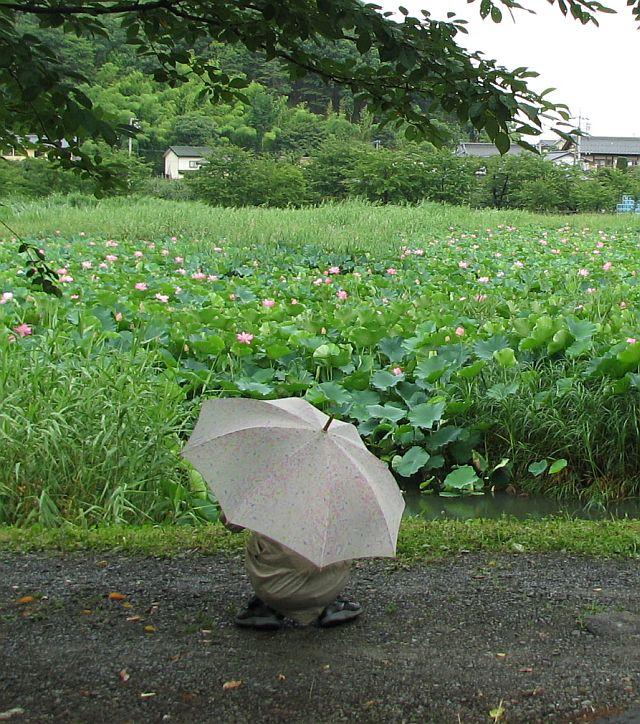 雨が上がれば