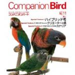companionbird11.jpg