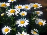 Flower-001.jpg