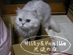 090127_201047~1