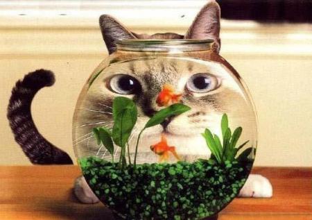 [1金魚鉢]
