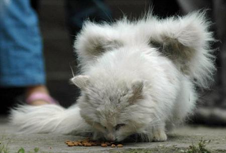 翼の生えた猫