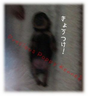 kicco2009_0202(001).jpg