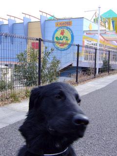 DOG COM
