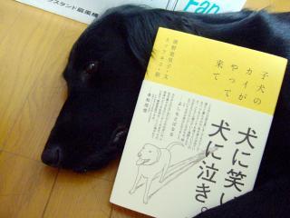 犬本紹介その21(1)
