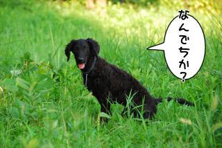 初散歩♪(4)