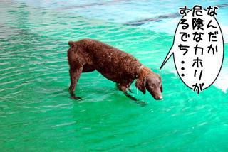 ジンガ初泳ぎに挑戦の巻(3)
