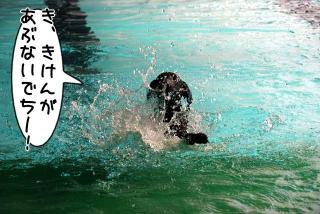 ジンガ初泳ぎに挑戦の巻(4)