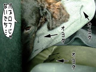 小山内裏公園ドッグラン登録申請(1)